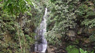 Der tropische Regenwald in 360 Grad