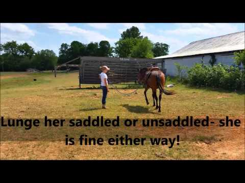 **AQHA Dash Ta Fame Filly FOR SALE**