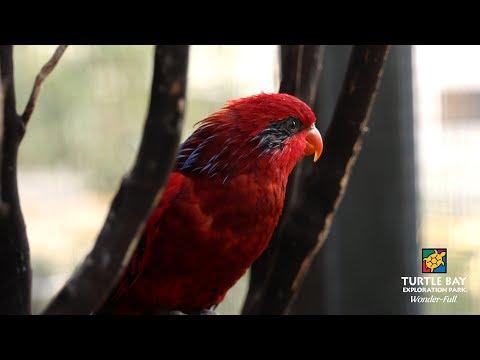 New birds in Parrot Playhouse - Turtle Bay Exploration Park - Redding, CA
