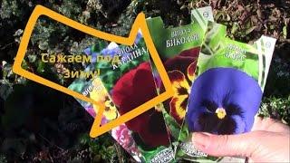 Виола.  Подзимний посев семян виолы.