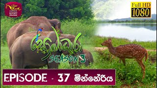 Sobadhara - Sri Lanka Wildlife Documentary | 2019-12-06 | Minneriya  (මින්නේරිය) Thumbnail