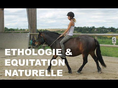 Ethologie/Equitation Naturelle : Stop aux Clichés !