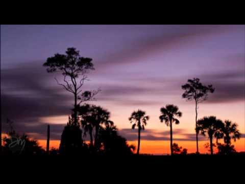 Florida Night Sounds