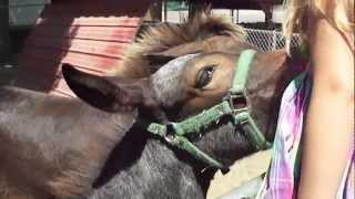 MJ FEEDS A HORSE!!