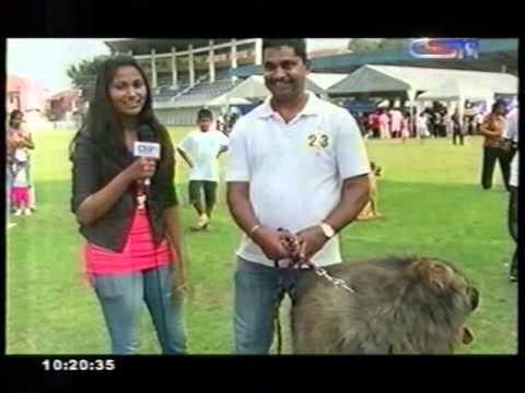 Ceylon Kennel Club Dog Show 1 2013