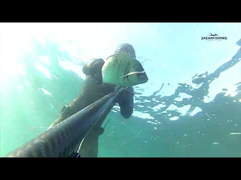 Spearfishing Albania - Peshkimi nenujore - Fundi i 2017 Redon Gjermeni