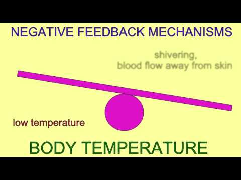 HOMEOSTASIS: NEGATIVE FEEDBACK MECHANISMS - YouTube