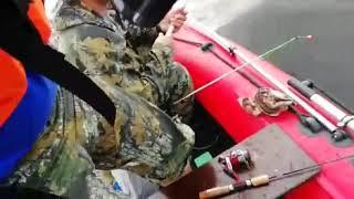 ловля судака на живца финский залив
