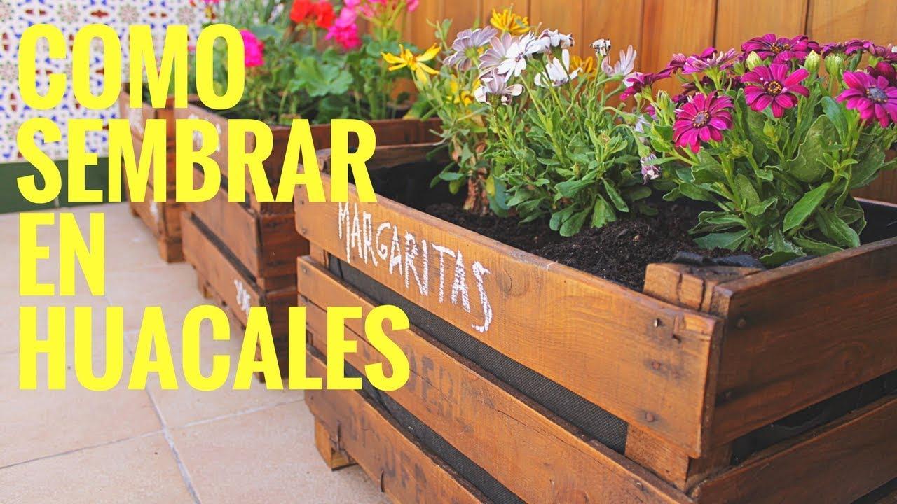 Como sembrar en rejas de madera huerto en casa manos for Para crear un area de jardin