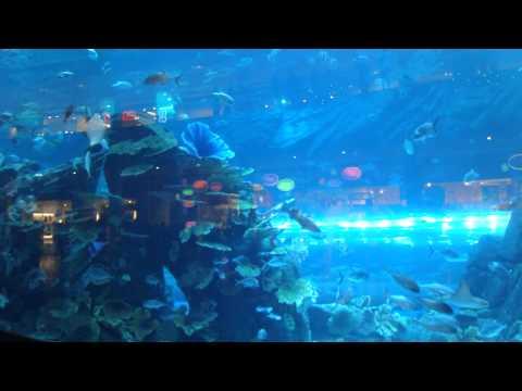 Dubai Aquarium & Underwater Zoo inside the Dubai Mall, United Arab Emirates