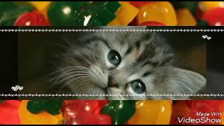 Фото милых котят 😘