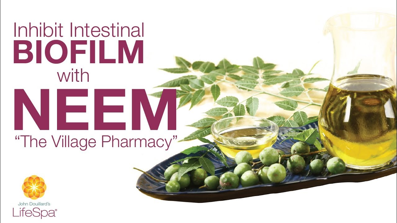 Inhibit Intestinal Biofilm with Neem