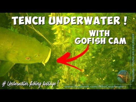 Belles tanches en vidéo sous-marine à Amiens (Caméra Waterwolf) from YouTube · Duration:  3 minutes 15 seconds