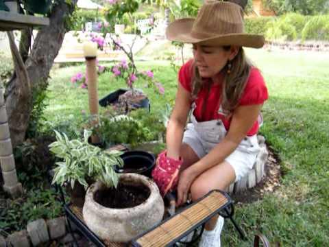 como sembrar una planta con claudia alarc n as a plant