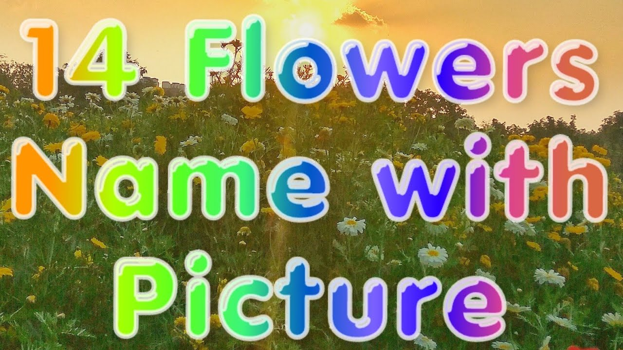 Different Types Of Flowers With Names Kinds Youtube