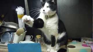 キッチンの出窓で調理を監視しつつ、時々遊ぶコッコちゃん。
