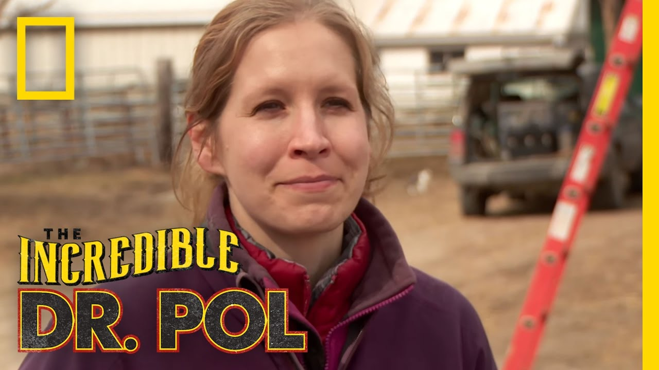 Polments: Dr  Emily's Dairy Swing Plunge | The Incredible Dr  Pol