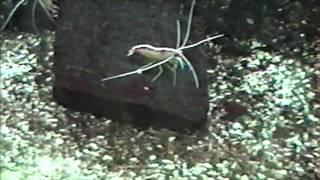 須磨水族園 1991/03/25.