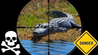 catch-n-cook-wild-alligator-gator-nuggets