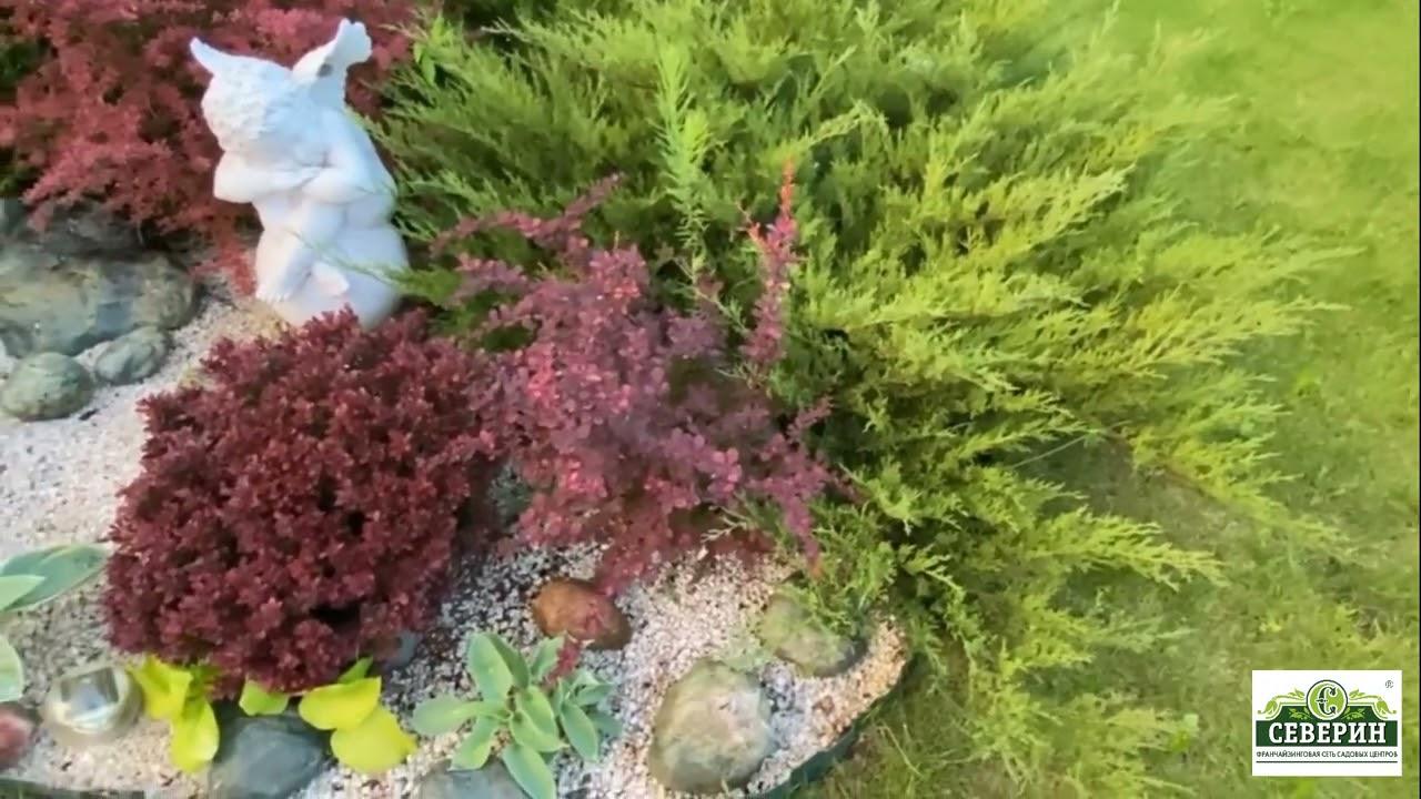 Сад минимального ухода