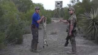 Hog Hunting and Predator Hunting with AR-15 in Texas