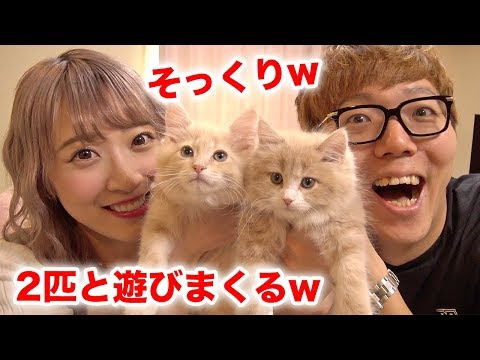 Saaya-chan's cat has become twins? I played with the second cat, Louis-kun