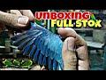 Unboxing Burung Lovebird Mulai rb An Akan Kah Naik  Mp3 - Mp4 Download