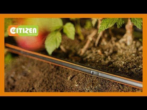 SMART FARM | Dripping Irrigation Farming In Naivasha