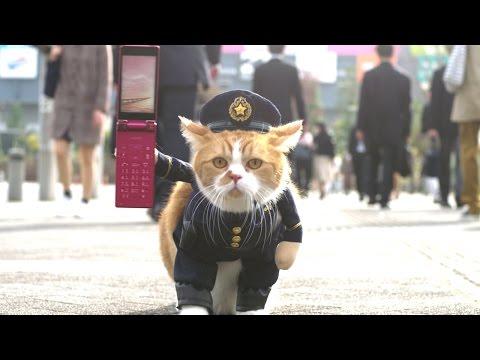 ふてニャン、愛くるしい警官姿の立ち歩き披露 ソフトバンク・ワイモバイル新CM「ネコのおまわりさん」篇