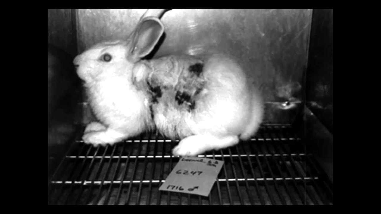 Persuasive speech on animal testing