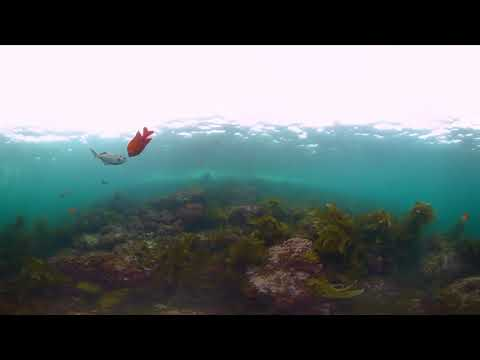 What are Marine Protected Areas?