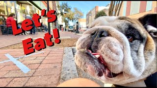 Reuben the Bulldog: Breakfast Downtown
