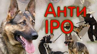 Собака для охраны,  старый метод, анти-IPO
