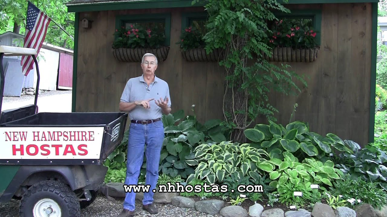 How To Keep Slugs Snails Out Of Your Hosta Garden