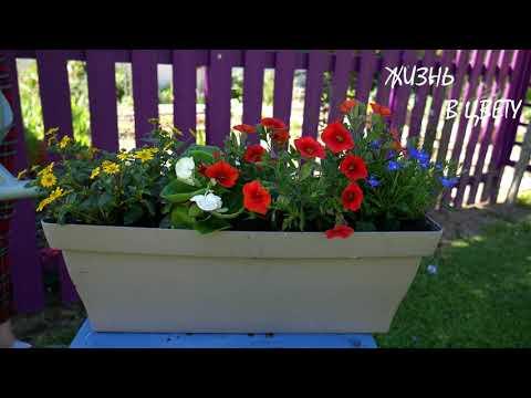 Цветочные композиции для фасада дома/ Цветочный микс для кашпо # 12