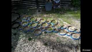 видео Садовые дорожки своими руками из подручных материалов с малыми затратами