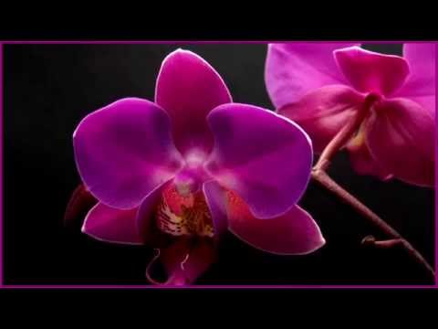 Nature Meditation - Relaxing Music - Flowers Blooming