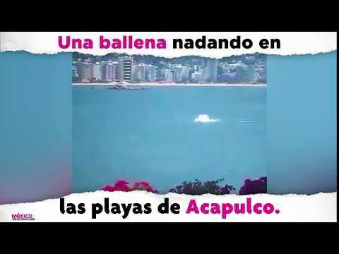 Captan a una ballena nadando en Acapulco
