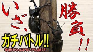 クワガタ&カブトムシ☆昆虫採集2017 木登りスタジアム2017でガチバトル...