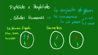 Diplóide versus Haplóide