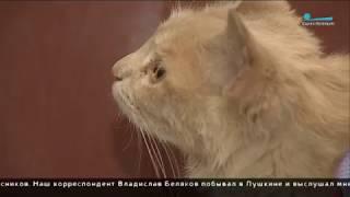 Охранник ЛГУ имени Пушкина бросил об пол беременную кошку