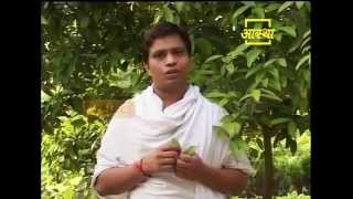 Ayurvedic use Indian Bay Leaf (Tez Patta)