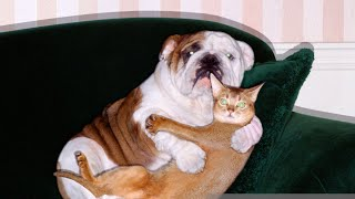 BEST DANK CAT MEMES COMPILATION 2019 (FUNNY CATS VIDEOS)