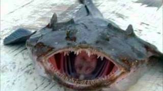 Funny/Weird Fish Pics