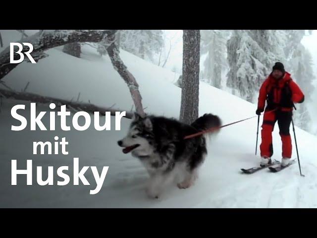 Immer wieder Arber: Patrick Koller und sein Husky | Bergauf-Bergab | Skitour | BR