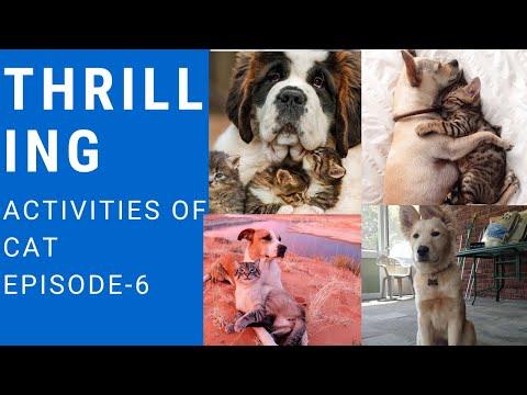 Thrilling activities of cats episode-6