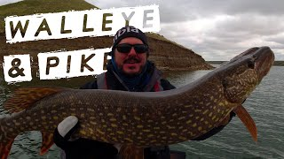 Catching Healthy PIKE and WALLEYE at 40 Mile Reservoir