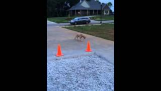 9 Year Old Training Her Puppy / Nashville Dog Training