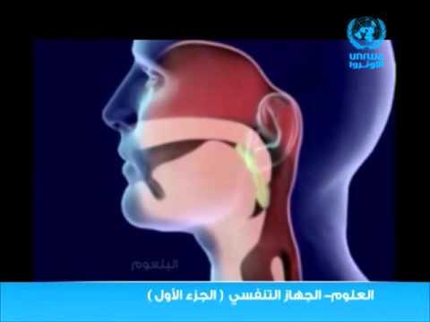 مكونات الجهاز التنفسي