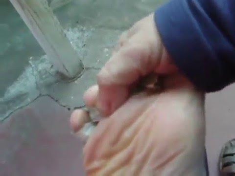 Info Olor De Taringa En Mal Pies wPX80Okn